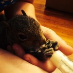 baby squirrel rehab