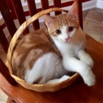 Cheeto in a basket